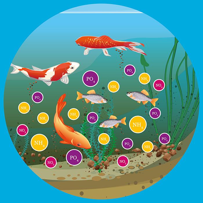 Gesunde fische im teich for Teich fische ohne filter