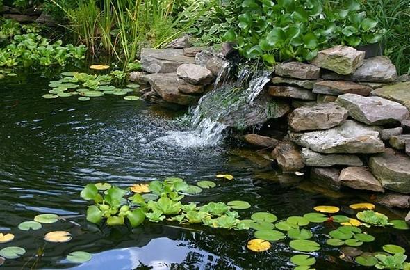 Die werte der marke bioteiga for Was brauchen fische im teich